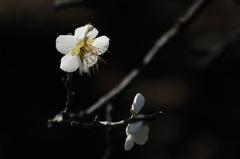 待春の小花…2