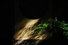 古刹の春影…3