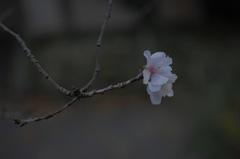 冬到来の白花姿…