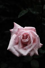 春彩の麗花…9