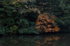 鎌倉湖・秋模様4…