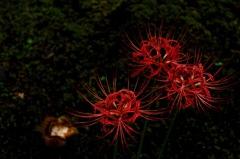 真紅の艶花…2