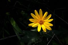 秋陽の花影…1
