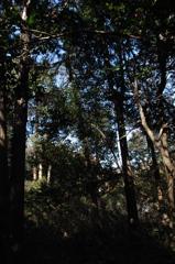 木漏れ日の陰影…2