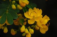 秋の黄金色…2