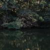 鏡面の鎌倉湖…1