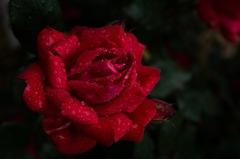 今春の花園…10