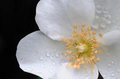 洋館の麗花…4