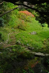 緑庭園の池模様…1