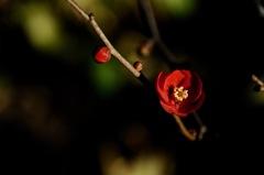 冬庭の紅一点…