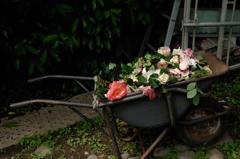古都の春麗花…花かご