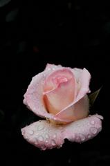 春彩の麗花…11
