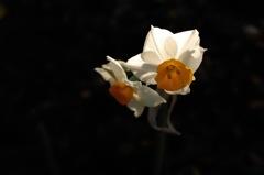初春の彩り…