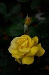 古都の春麗花…8