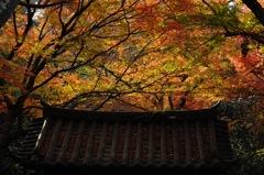 秋色繚乱…1