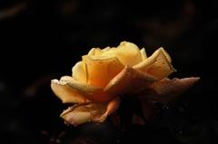 洋館の麗花…6