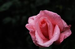 春彩の麗花…10