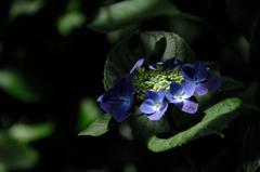 古都の色変花…3