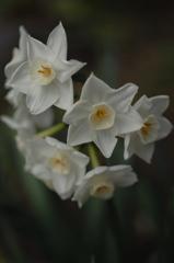 鎌倉の春花…6