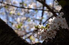 古刹の輝花…2