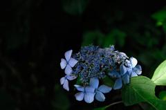 古都の色変花…5