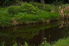 緑庭園の池模様…2