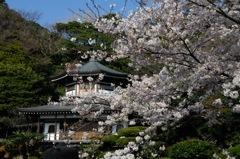 古都の薄桜色…1