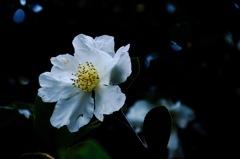 安国論寺の秋花…1