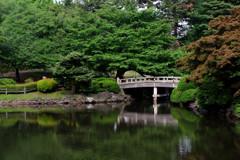新宿御苑・池の緑…