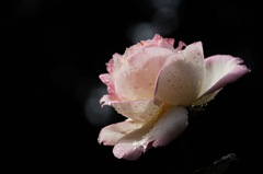 洋館の麗花…2