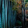 冬緑の竹林…2
