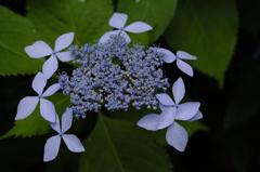 古都の七色花…2