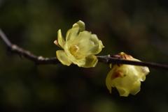新春の彩り…6