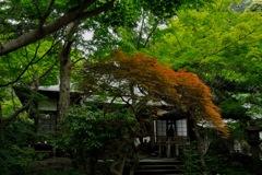 緑園の古寺…1