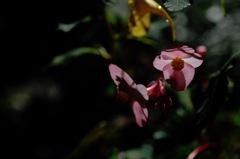 秋光の桃花色…