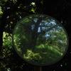 歪んだ緑景…1