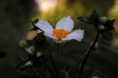 訪秋の白弁…
