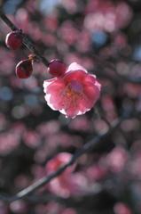 待春の小花…3