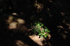 木漏れ日の陰影…3