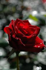 今春の花園…6