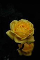 禅庭の麗花…