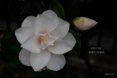 四季の寺花…4