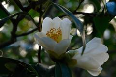 寺庭の冬花…1