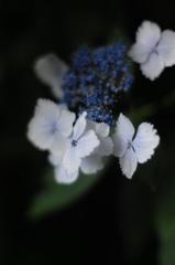 山中の白美…2