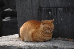 古刹の眠り猫…2