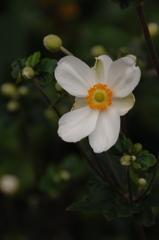名刹の夏花…1