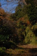晩秋の鎌倉古道…2