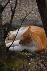 古刹の眠り猫…1