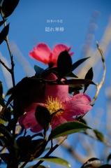 四季の寺花…1