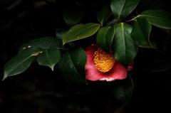 如月の淑花…1